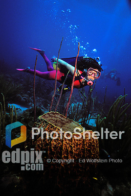 27 May 1986: Scuba Diver Sally Herschorn swims over a basket sponge just past West Wall on Salt River Wall off the Island of St. Croix in the US Virgin Islands. Shot with a Nikonos III and 15mm U/W Nikkor (old style) on Fujichrome 50. 1/30 sec. @ f/8 with single Ikelite 150L strobe, non-SST on full power manual. CC30R Filter...Mandatory Photo Credit: Ed Wolfstein Photo