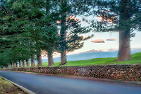 Road through Cook Island Pines. Kapalua, Maui, Hawaii.