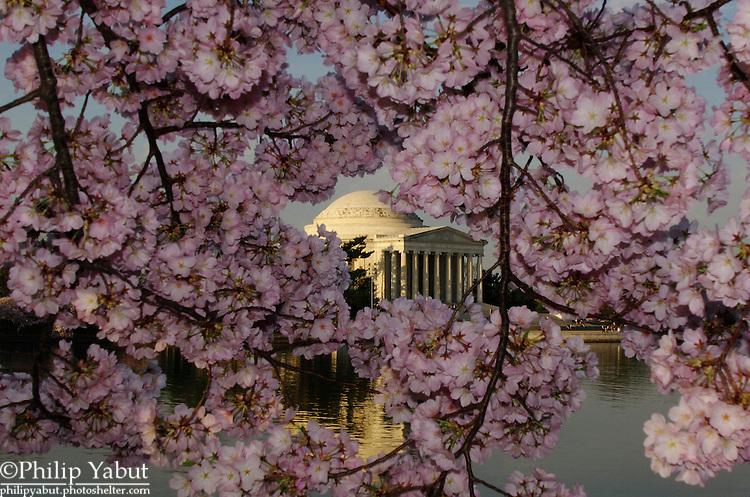 2013 National Cherry Blossom Festival -- Jefferson Memorial