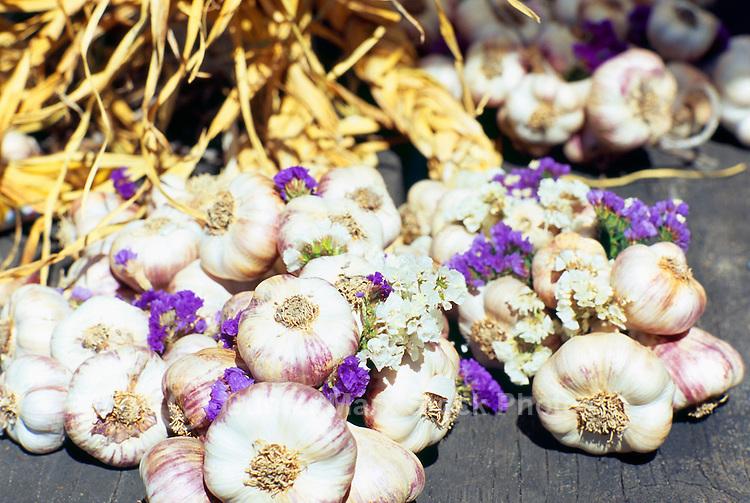 5th Annual Garlic Festival, August 2013 (hosted by The Sharing Farm) at Terra Nova Rural Park, Richmond, BC, British Columbia, Canada - Garlic Braids for sale