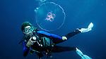 Diver with Moon Jellyfish, Islamorada, Florida