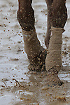 February 22, 2015: Scenery at Oaklawn Park in Hot Springs, AR. Justin Manning/ESW/CSM