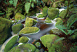 Moss covered rocks in Preservation Inlet. Fiordland National Park New Zealand.