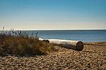 Hammonasset Beach State Park, CT. with log bench.