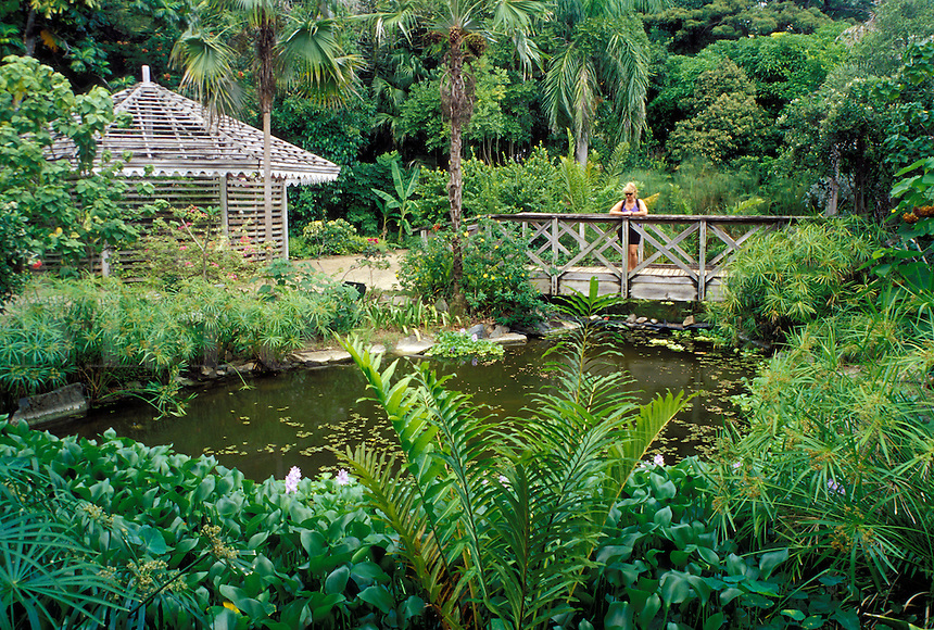 Tortola, British Virgin Islands, Road Town, Caribbean, BVI, JR O'Neal Botanic Gardens in Road Town on the island of Tortola.