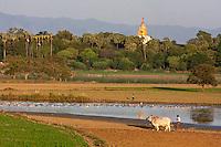 Myanmar, Burma, Mandalay.  Farmer's Field at Edge of Lake Taungthaman, Amarapura.