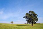 Europa, DEU, Deutschland, Hessen, Laubach-Freienseen, Naturpark Hoher Vogelsberg, Baeume, Himmel, Wolken, Cirruswolken, Kategorien und Themen, Natur, Umwelt, Landschaft, Jahreszeiten, Stimmungen, Landschaftsfotografie, Landschaften, Landschaftsphoto, Landschaftsphotographie, Naturschutz, Naturschutzgebiete, Landschaftsschutz, Biotop, Biotope, Landschaftsschutzgebiete, Landschaftsschutzgebiet, Oekologie, Oekologisch, Typisch, Landschaftstypisch, Landschaftspflege<br /> <br /> [Fuer die Nutzung gelten die jeweils gueltigen Allgemeinen Liefer-und Geschaeftsbedingungen. Nutzung nur gegen Verwendungsmeldung und Nachweis. Download der AGB unter http://www.image-box.com oder werden auf Anfrage zugesendet. Freigabe ist vorher erforderlich. Jede Nutzung des Fotos ist honorarpflichtig gemaess derzeit gueltiger MFM Liste - Kontakt, Uwe Schmid-Fotografie, Duisburg, Tel. (+49).2065.677997, <br /> archiv@image-box.com, www.image-box.com]