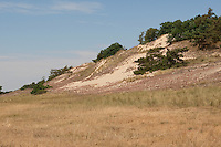 Trockenrasen, Trocken-Rasen, Binnendüne, nährstoffarmer, sandiger Biotop, NSG, Naturschutzgebiet Binnendünen bei Klein Schmölen, Mecklenburg-Vorpommern, Elbtaldüne
