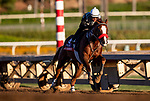 OCT 26: Breeders' Cup Sprint entrant Landeskog, trained by Doug F. O'Neill, works at Santa Anita Park in Arcadia, California on Oct 26, 2019. Evers/Eclipse Sportswire/Breeders' Cup