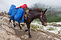 Pack Mule carrying load on Tour de Mont Blanc long distance path. Alps, France.
