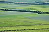 grüne Landschaft aus Weinbergen und Feldern