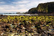 Image Ref: CA970<br /> Location: Bushrangers Bay Track<br /> Date of Shot: 28.09.19