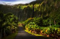 Road in Hoomaluhia Park Botanical Gardens. Oahu, Hawaii