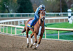 November 3, 2020: Monomoy Girl, trained by trainer Brad Cox, exercises in preparation for the Breeders' Cup Distaff at Keeneland Racetrack in Lexington, Kentucky on November 3, 2020. Jon Durr/Eclipse Sportswire/Breeders Cup