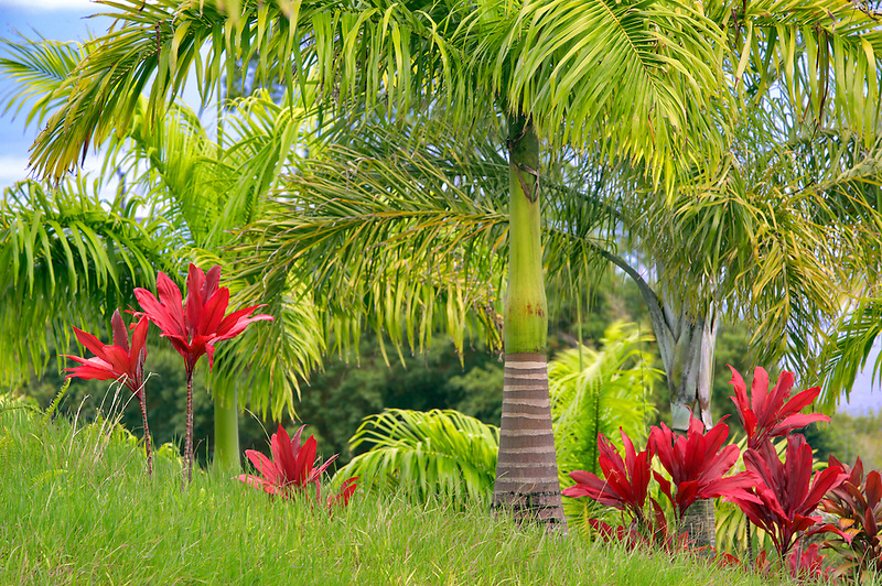 Tropical plants and palm tree.  Garden of Eden Botanical Gardens. Maui. Hawaii