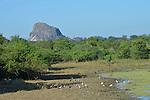 Yala National Park Sri Lanka<br /> Asian Open Billed Storks, Black Headed Ibis and White Breasted Kingfisher