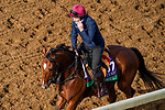 November 5, 2020: Mogul, trained by trainer Aidan P. O'Brien, exercises in preparation for the Breeders' Cup Turf at Keeneland Racetrack in Lexington, Kentucky on November 5, 2020. John Voorhees/Eclipse Sportswire/Breeders Cup/CSM