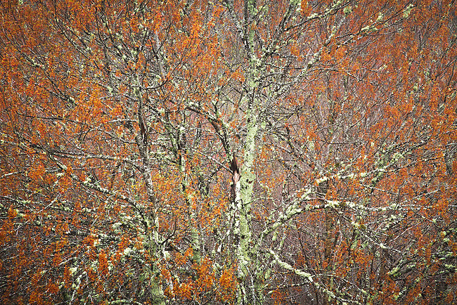 Spring tapesty, Blue Ridge Parkway
