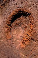 27-30 MILLION YEAR OLD MAMMAL TRACKS ALONG THE SAN PEDRO RIVER