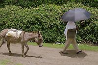 Addis Abeba, uomo con ombrello e il suo asino.man with umbrella and his donkey