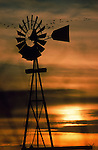 Cranes silhouetted in flight behind a windmill in Nebraska.