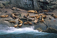 Steller's sea lion rookery, Kenai Fjords National Park, Alaska