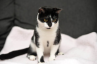 Pictured: Oscar the cat.<br /> A cat named Oscar has been returned home after going missing since before last Christmas. Oscar was returned from Kent more than 200 miles from his home in Caerau, Cardiff. His owners Danielle, 27, and Rebecca, 28, Spencer are thrilled he has come home. They are urging all pet lovers to have their animals micro chipped .