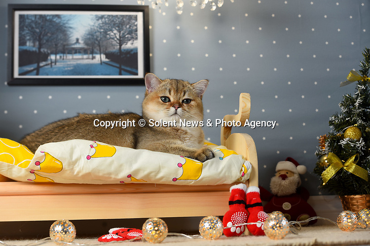 """Cat-crazy Anna Mikulich has made her pampered pet its own bedroom - complete with a hand-made bed, Christmas tree and chandelier.  Mrs Mikulich, 35, built her six month old feline Finn his specially made room in an attempt to stop him sleeping on her pillow every night.<br /> <br /> The wedding photographer says he threw herself into the unusual project as she had more time than usual on her hands due to it being a quiet year for weddings.  The mother of two, from Basingstoke, Hants, said: """"Finn spends most of the night with us, trying to take over our pillows or laying on top of us.  SEE OUR COPY FOR DETAILS.<br /> <br /> © Roger Arbon/Solent News & Photo Agency<br /> UK +44 (0) 2380 458800"""