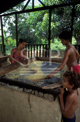 Belterra, Amazon, Brazil. Woman and two boys in a Casa de Mandioca sieving manioc (cassava). Para State.