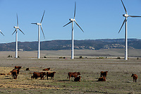 Spain, Andalusia, Cadiz, wind farm in village on cattle farm, Acciona AE-59 wind turbines