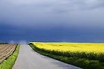 Europa, DEU, Deutschland, Nordrhein Westfalen, NRW, Rheinland, Niederrhein, Juechen, Agrarlandschaft, Bluehende Rapsfelder, Raps, Fruehling, Wolken, Gewitterwolke, Wetterfront, Weg, Strasse, Kategorien und Themen, Landwirtschaft, Landwirtschaftlich, Agrar, Agrarwirtschaft, Natur, Naturfoto, Naturfotos, Naturfotografie, Naturphoto, Naturphotographie, Landschaft, Landschaften, Landschaftsfoto, Landschaftsfotografie, Landschaftsphoto, Landschaftsphotographie......[Fuer die Nutzung gelten die jeweils gueltigen Allgemeinen Liefer-und Geschaeftsbedingungen. Nutzung nur gegen Verwendungsmeldung und Nachweis. Download der AGB unter http://www.image-box.com oder werden auf Anfrage zugesendet. Freigabe ist vorher erforderlich. Jede Nutzung des Fotos ist honorarpflichtig gemaess derzeit gueltiger MFM Liste - Kontakt, Uwe Schmid-Fotografie, Duisburg, Tel. (+49).2065.677997, schmid.uwe@onlinehome.de, www.image-box.com]