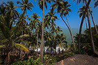 Beautiful palm tree forest under a blue sky and overlooking the turquoise Arabian sea, in Cape Ramas, near Palolem beach in Goa India