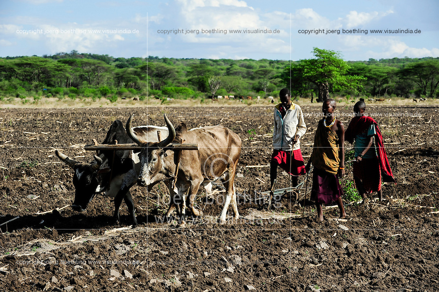 TANZANIA Kondoa, village Mombose , adoption of climate change, Masai who are usually cattle breeder, plough field with ox for crop cultivation / TANSANIA Kondoa, Dorf Mombose, Anpassung an den Klimawandel, Massai die urspruenglich Viehzuechter waren, pfluegen ein Feld fuer den Anbau von Nahrungspflanzen