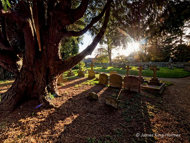 Yew tree & gravestones in the southern churchyard of St. Nicholas chirch, Fyfield, Oxfordshire, UK. The church dates from the 13th Century and the parish was formerly in Berkshire.