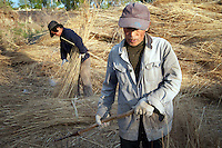 A couple working with reeds, harvested from the Zhalong Wetlands, Heilongjiang Province. China. 2011