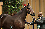 Hip 148 Xs Belle consigned by Taylor Made sales sold for $510,000 to Adena Springs Farm..November 06, 2012.