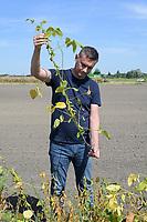 CROATIA, Osijek, agricultural company Fermopromet, soybean farming / KROATIEN, Osijek, Sojaanbau bei Fermopromet, Betriebsleiter