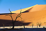 Camelthorn trees silhouetted against sand dunes in Namibia.