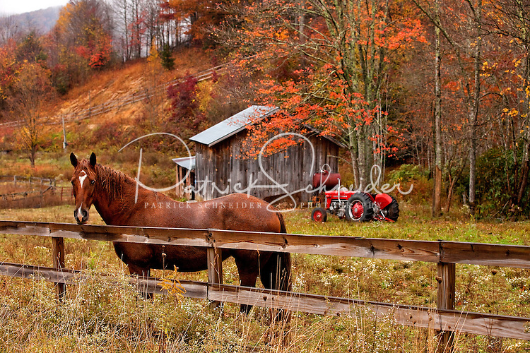 A horse gazes over the fence at a farm in Banner Elk, North Carolina.