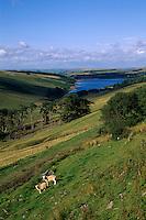 Großbritannien, Wales, Brecon Beacons, See bei Crai.scenery Brecon Beacons