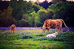 Springtime in Washington County, Texas.