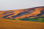 Early morning in the Palouse Hills graces a family farm with soft light.  Palouse Country, in Washington, known as the heart of wheat farming in the United States is also famous for its rolling scenery.  This landscape is from Kamiak Butte, a Whitman County Park offering camping, picknicking, hiking, and incredible views of both Idaho and Washington Palouse country.  Steptoe Butte, a Washington State Park, is in the background.  Please contact the photographer regarding licensing this image.
