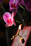 Bao-jhong Yi-min Temple, Kaohsiung -- Orchids inside a temple.