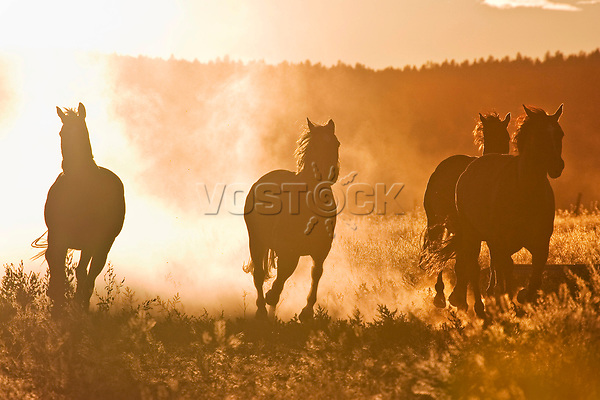 horses at sunset, Oregon, USA