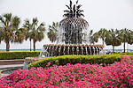 Azaleas adorn the Pineapple Fountain at Waterfront Park in Charleston, SC, a National Historic Landmark district.