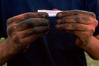 Tobacco Hands, Cameron Richardson, Pellizzers Farm, Dimbulah, 2003.