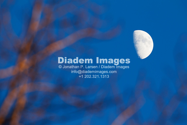 Super telephoto view of half moon through some bare forest tree branches.
