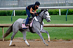 LOUISVILLE, KENTUCKY - APRIL 30: Sailor's Valentine, owned by Semaphore Racing LLC and Homewrecker Racing LLC and trained by Eddie Kenneally, exercises in preparation for the Kentucky Oaks at Churchill Downs on April 30, 2017 in Louisville, Kentucky. (Photo by Jon Durr/Eclipse Sportswire/Getty Images)