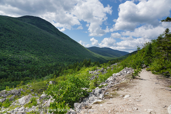 Zealand Notch - Scenic view from along the Appalachian Trail (Ethan Pond Trail) in the New Hampshire White Mountains during the summer months. This trail utilizes parts of the old railroad bed of the Zealand Valley Railroad (1886-1897).