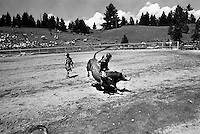 A cowboy tries to ride a bull at the annual Lincoln Rodeo in Lincoln, MT in June 2006.  The Lincoln Rodeo is an open rodeo, which means competitors need not be a member of a professional rodeo association.